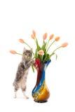 Gattino diritto con i tulipani in un vaso Fotografia Stock Libera da Diritti