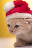 Gattino divertente piccolo Fotografia Stock