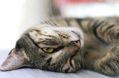 Gattino dolce Immagini Stock Libere da Diritti