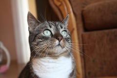 Gattino dolce Fotografia Stock Libera da Diritti