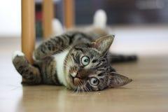 Gattino dolce Fotografie Stock