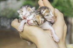 Gattino dolce che prende un pelo Fotografie Stock