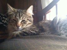 Gattino dolce di sonno Fotografia Stock Libera da Diritti
