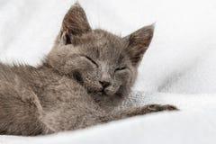 Gattino domestico sveglio che si trova sull'asciugamano bianco immagini stock