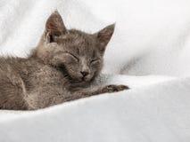 Gattino domestico sveglio che si trova sull'asciugamano bianco immagine stock