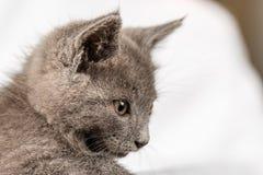 Gattino domestico sveglio che si trova sull'asciugamano bianco fotografia stock libera da diritti