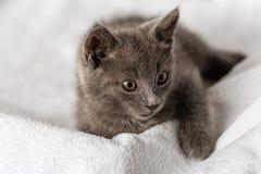 Gattino domestico sveglio che si trova sull'asciugamano bianco immagine stock libera da diritti