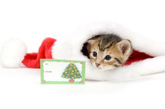 Gattino e cappello della Santa con la scheda Fotografia Stock Libera da Diritti