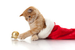 Gattino e copricapo del Babbo Natale Fotografia Stock Libera da Diritti