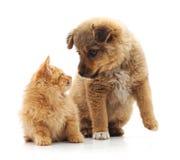Gattino e cucciolo Fotografia Stock