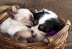 Gattino e cucciolo Fotografie Stock
