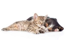 Gattino e cucciolo di basset hound che dorme insieme Isolato su bianco immagini stock libere da diritti