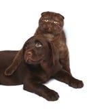 Gattino e cucciolo su una priorità bassa bianca. Fotografie Stock