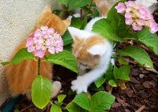 Gattino e fiori Fotografia Stock Libera da Diritti