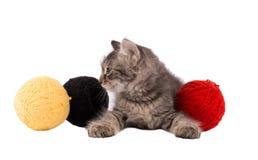 Gattino e gomitoli di filo marroni divertenti Fotografia Stock