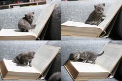Gattino e libri svegli, multicam, schermo di griglia 2x2 Fotografia Stock
