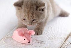Gattino e mouse rosa Immagini Stock