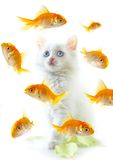 Gattino e pesci fotografia stock