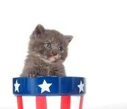 Gattino e quarto di luglio Fotografia Stock Libera da Diritti