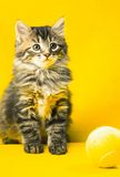 Gattino e sfera Fotografia Stock Libera da Diritti