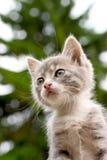 Gattino ed albero Immagine Stock Libera da Diritti