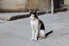 Gattino egiziano fotografia stock
