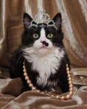 Gattino elegante di principessa Long Hair Tuxedo fotografia stock libera da diritti