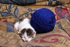 Gattino faticoso Fotografia Stock Libera da Diritti