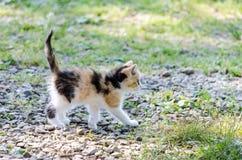 Gattino felice del granaio fotografie stock libere da diritti