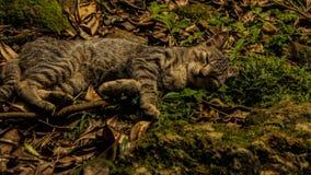 Gattino felice di sonno Fotografia Stock