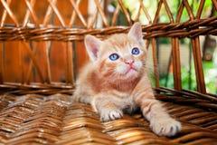 Gattino giallo sveglio lanuginoso Immagini Stock Libere da Diritti