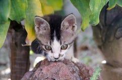 Gattino in giardino tropicale Fotografia Stock Libera da Diritti