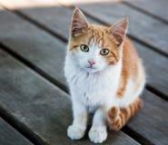 Gattino grazioso fotografia stock