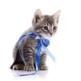 Gattino grigio adorabile con nastro adesivo fotografie stock