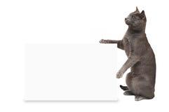 Gattino grigio affumicato Fotografia Stock Libera da Diritti