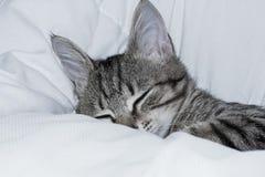 Gattino grigio che dorme sulla coperta Fotografia Stock