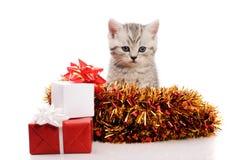 Gattino grigio con i regali ed il lamé di natale Immagini Stock Libere da Diritti