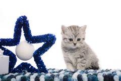 Gattino grigio con la stella decorativa blu profonda Fotografie Stock Libere da Diritti