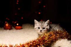 Gattino grigio con le decorazioni di natale Fotografie Stock
