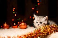 Gattino grigio con le decorazioni di natale Immagini Stock Libere da Diritti
