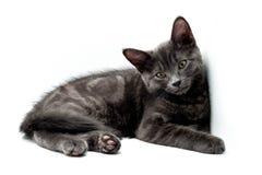 Gattino grigio sveglio Fotografia Stock Libera da Diritti