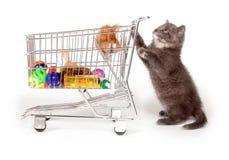Gattino grigio sveglio che spinge il carrello di acquisto Immagini Stock Libere da Diritti