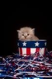 Gattino grigio sveglio e quarto delle decorazioni di luglio Fotografia Stock Libera da Diritti