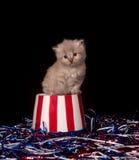 Gattino grigio sveglio e quarto delle decorazioni di luglio Immagine Stock Libera da Diritti