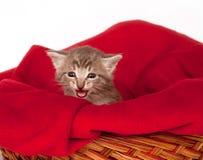 Gattino grigio triste Fotografia Stock