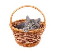 Gattino grigio in un cestino Immagine Stock