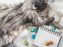 Gattino incantante, sketchbook con una pagina in bianco e le uova di Pasqua immagini stock libere da diritti