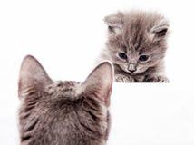 Gattino innocente Immagini Stock Libere da Diritti