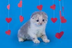 Gattino isolato su un fondo blu Fotografia Stock Libera da Diritti