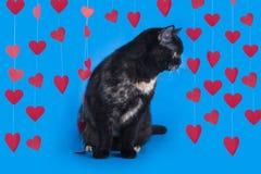 Gattino isolato su un fondo blu Fotografie Stock